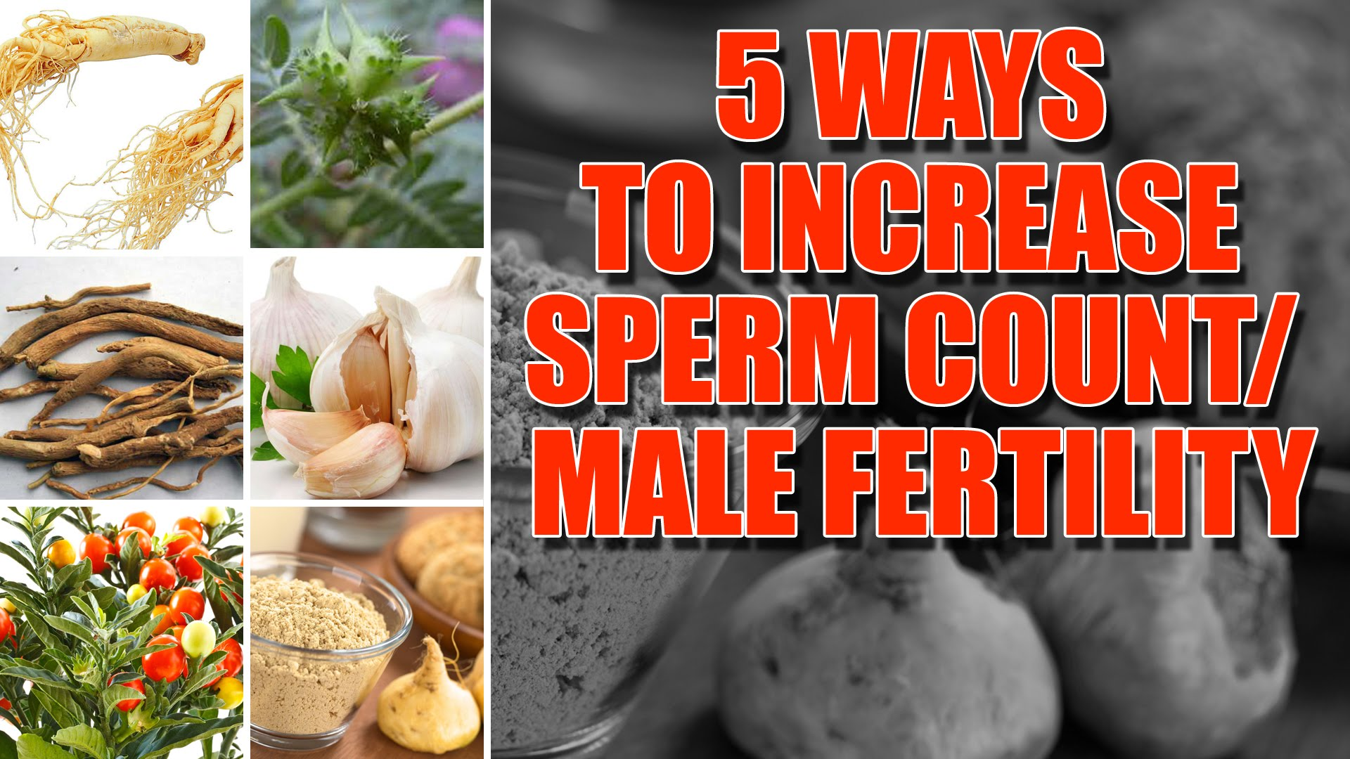 Five Food That Can Help Increase Sperm Count