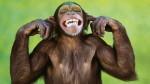 Lobatan: Monkeys Stone Priest To Death