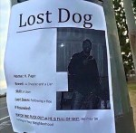 Hell Hath No Fury: Scorned Woman Makes Poster Of Cheating Partner, Calls Him A 'Lost Dog'