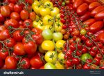 10 Reasons Why You Should Eat More Tomatoes