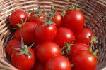Price Of Tomatoes Crash,Now N800 Per Basket Instead Of N25,000