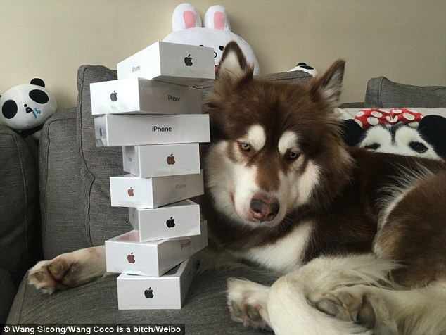 SMH: Son Of China's Richest Man Buys 8 iphone7 For His Super Spoilt DOG (Photos)