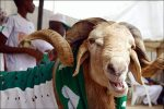 Youth Groups Challenge Sultan Of Sokoto For Declaring Sallah On The 12th Of September, Saying He Has No Right