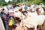 Ed-El-Kabir Celebration: Check Out Prices Of Rams Around The Country