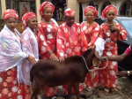 Alaafin Of Oyo And His Beautiful Wives Pose With Sallah Ram(Photos)