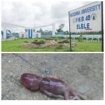 Aborted Baby Found In Madonna University Girls Hostel( Viewer Discretion)
