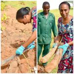 Wife Of The Vice President Mrs Dolapo Osinbajo Shows Off Huge Tubers Of Yam Harvested From Her Backyard Garden