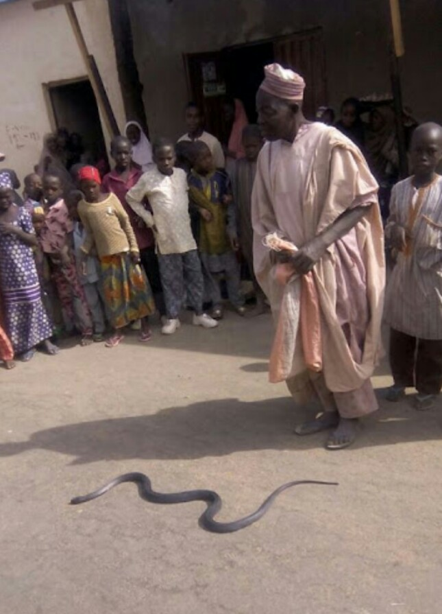 OMG!!! Meet The Hausa Man Who Plays With Snakes!