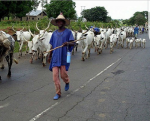 """""""Fulani Herdsmen Are The New Power Brokers"""" – Alibaba Quips 