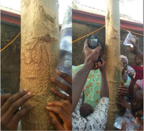Check Out Picture Of The Tree With Arabic Inscriptions Found In Ogun State