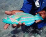 Check Out This Colorful Fish Someone Caught And Posted Online