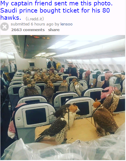 Saudi Prince Allegedly Buys Plane Tickets For His 80 Hawks(Photo)