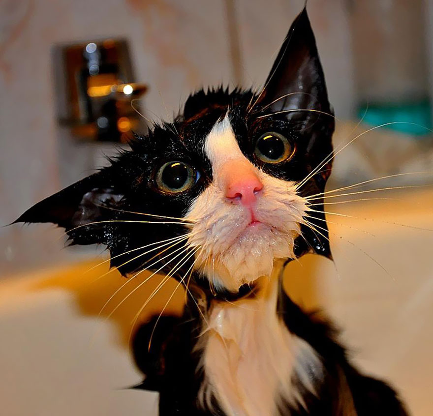 funny-wet-cats-1
