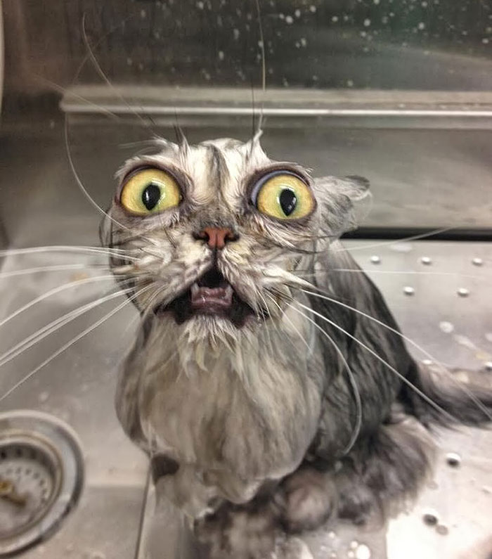 funny-wet-cats-coverimage