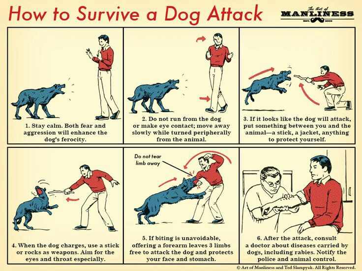 How To Survive A Dog Attack
