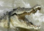 Pastor Trying To Walk On Water At  Crocodile River Gets Eaten By 3 Crocodiles