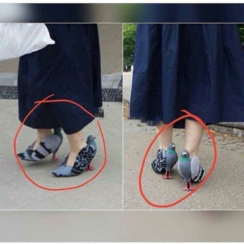 Fashionistas, Would You Rock This Pigeon Shoes?