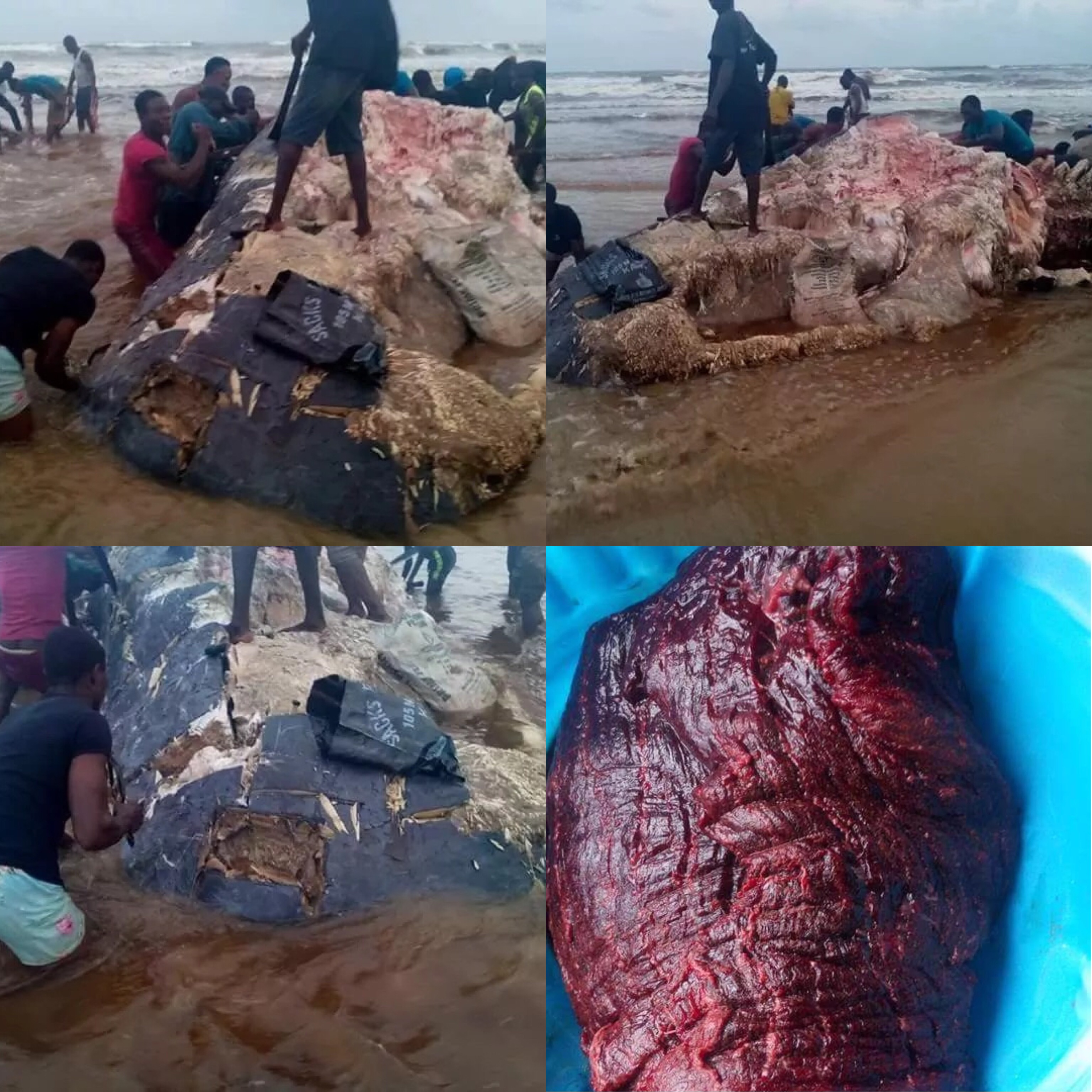 Nigerians Descend On Dead Whale Washed Ashore Beach In Rivers
