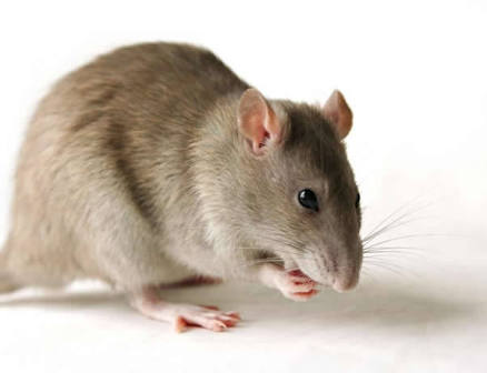 Three More Confirmed LASSA Fever Cases Reported