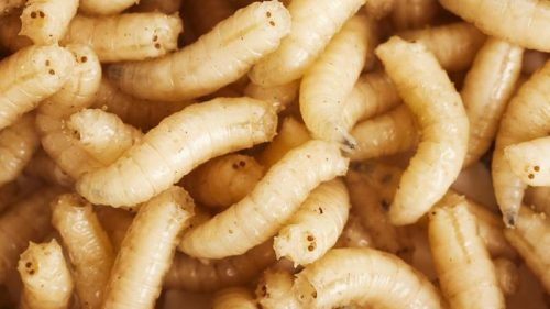 """'How My Husband Turned My Kitchen Into A Maggot Infested Place Because I Travelled For A week"""" Wife  Laments As She Shares Shocking Video"""